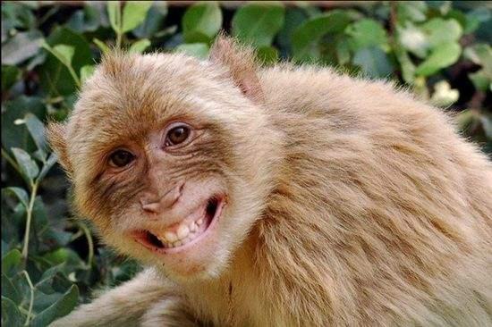 尽管被禁止,但在旅途中遇到野生动物时,许多人都试图与猴子亲密接触.