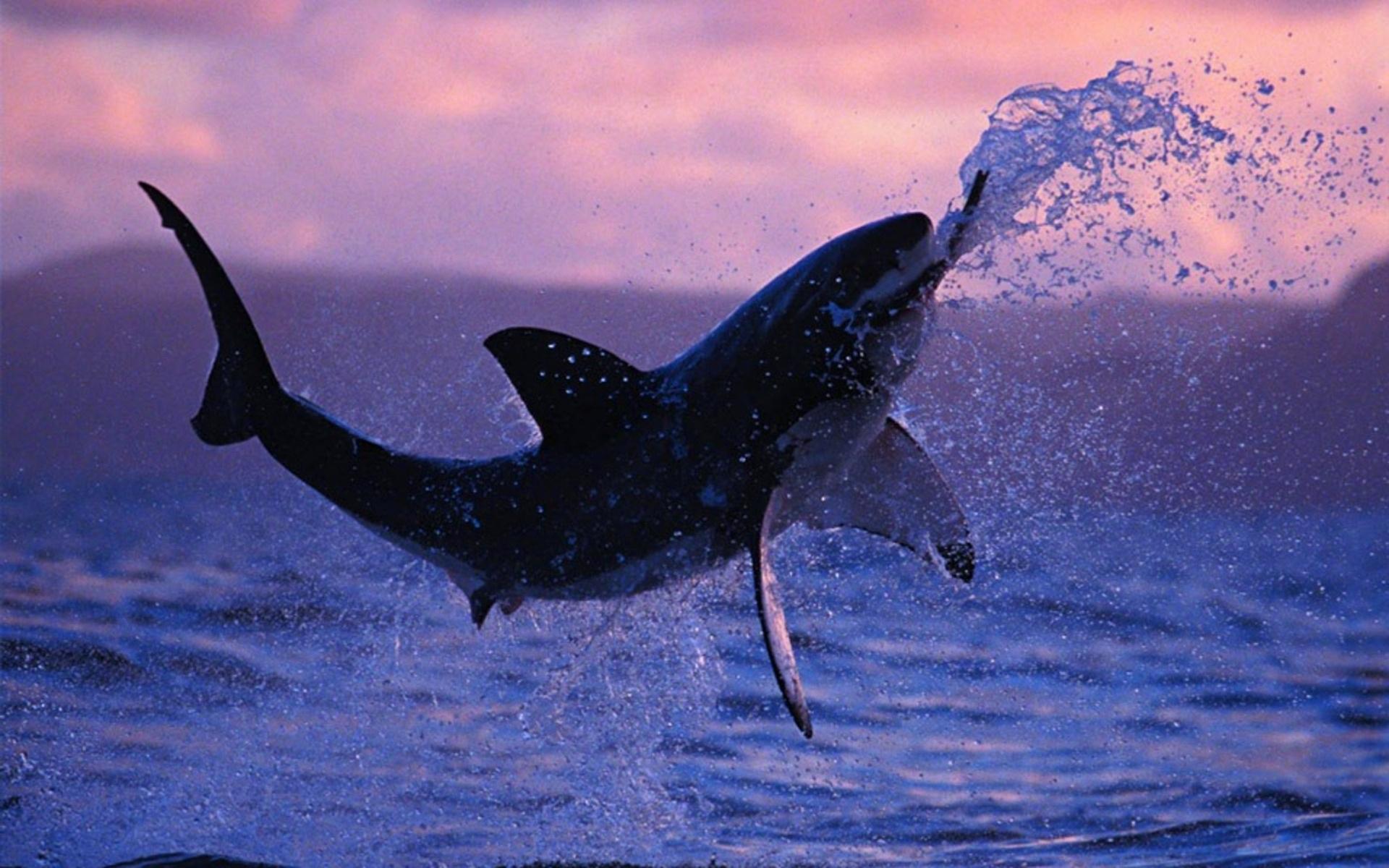 壁纸 动物 海洋动物 鲸鱼 桌面 1920_1200